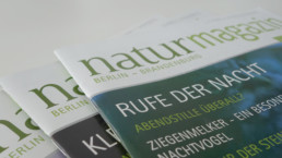 Neues Magazin-Layout